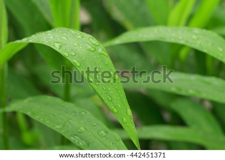 close up shot of drop of water on green leave - stock photo