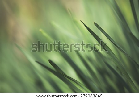 Close up shot of grass on a lawn. Bright and vibrant green summer or spring image - stock photo