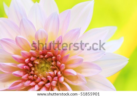 Close-up shot of pink gerbera with green leaf as background. - stock photo