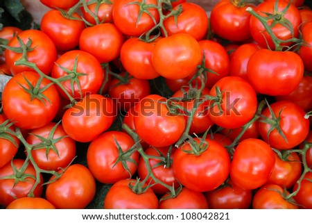 Close up shot of red tomatoes at vine