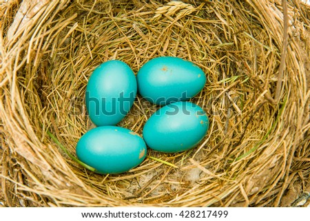 Close up shot of robins eggs - stock photo