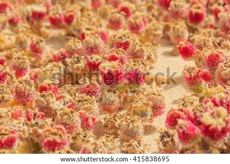 Close up shot of small succulent plant, selective focus - stock photo
