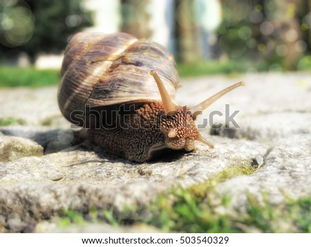 close up shot of snail on the road