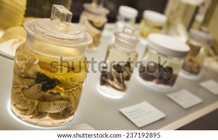 Close-up shot of some specimens kept in glasses in a science laboratory. - stock photo