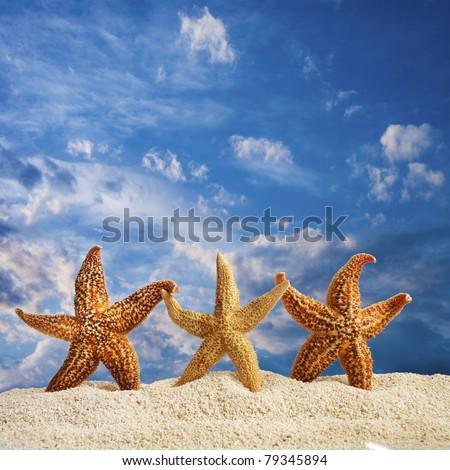 close up shot of three starfish on sandy beach - stock photo