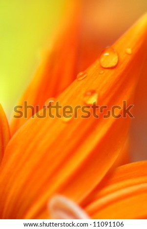 Close up shot of water drop lets on orange petals - stock photo