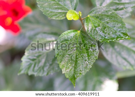 close up shot of wet green leaves - stock photo