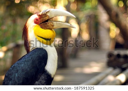 Close up shot of wreathed hornbill during daylight. - stock photo