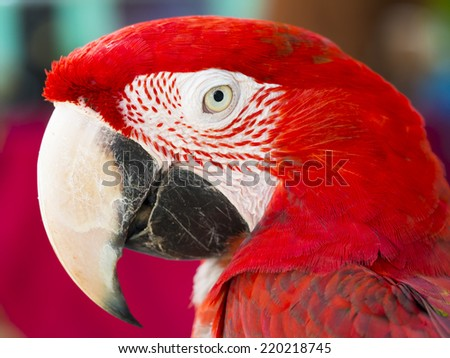 close up shot on eye of red macaw parrot bird - stock photo