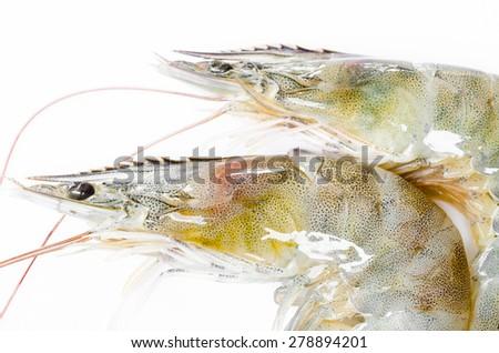 close up shrimp big raw isolated on white background - stock photo
