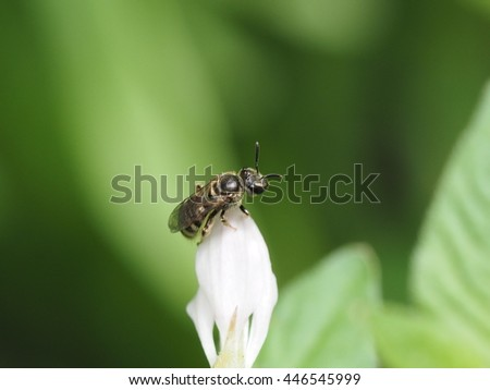 close up small black bee on very small flower. - stock photo
