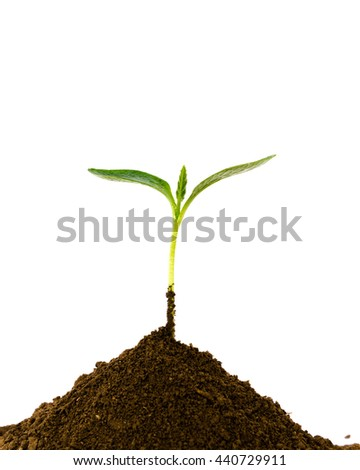 Close-up small green young plant growing up from black heap soil over isolated white background. Green spout for save/safe conservation environment. Organic growing, clean ecosystem concept.Copyspace.