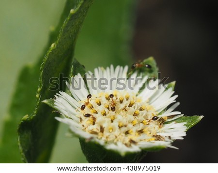 close up small red ant sucking nectar on grass flower. - stock photo