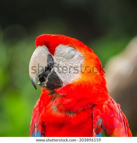 Close up smiling Macaw bird - stock photo