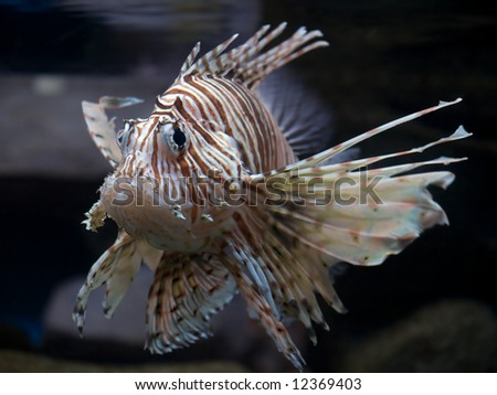 Close-up striped Tropical Fish Tank Shot - stock photo