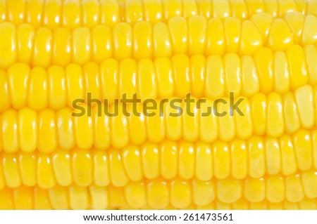 Close up sweet corn, natural texture and pattern - stock photo