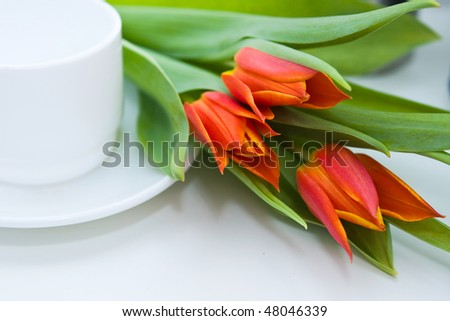 close up tender tulips - stock photo
