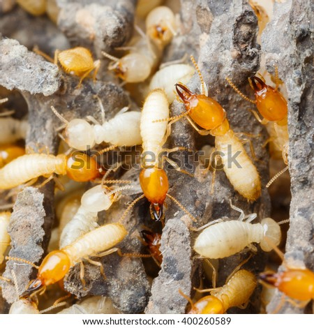 Close up termites or white ants destroyed - stock photo