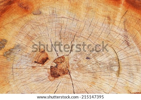 close up texture of cut tree trunk