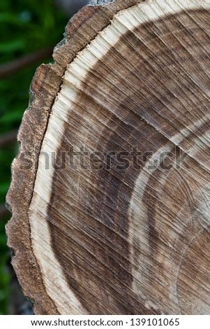 Close up texture of hardwood logs from - stock photo