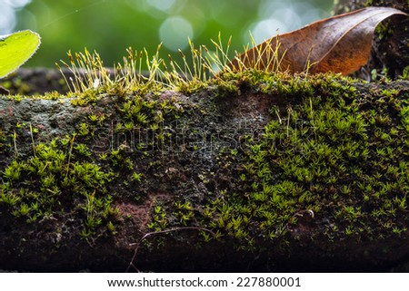 Close up texture of old stone wall covered green moss - stock photo