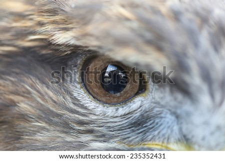 Close up The one eye of Eagle - stock photo