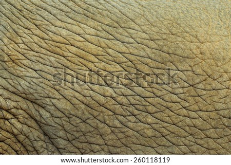 Close up the skin of an elephant Thailand - stock photo