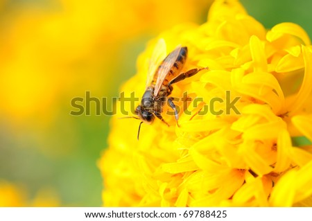 close up to bee hold on yellow flower