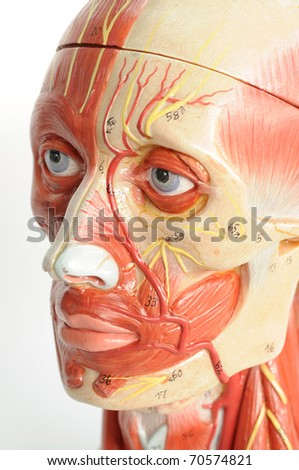 close up to face human model - stock photo