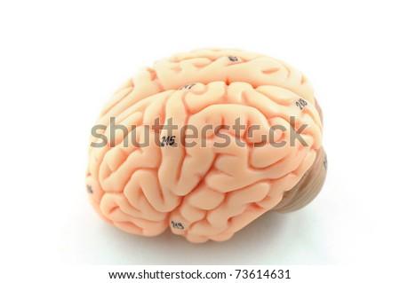 close up to human brain - stock photo
