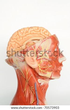 close up to human model - stock photo