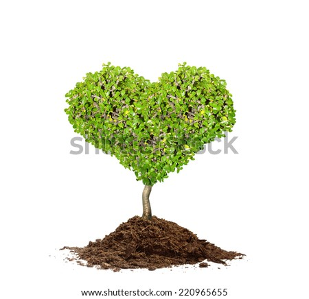 close up tree and soil - stock photo