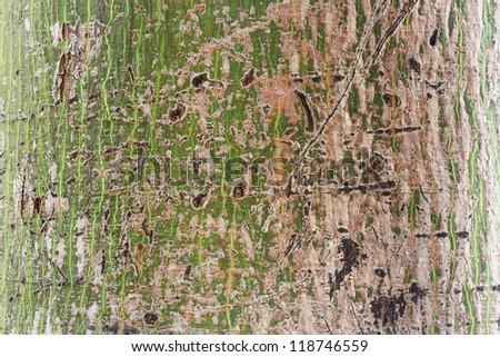 Close up Tree bark background - stock photo