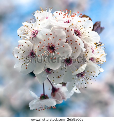 Close-up tree blossom - stock photo