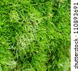Close-up Tree Moss. - stock photo