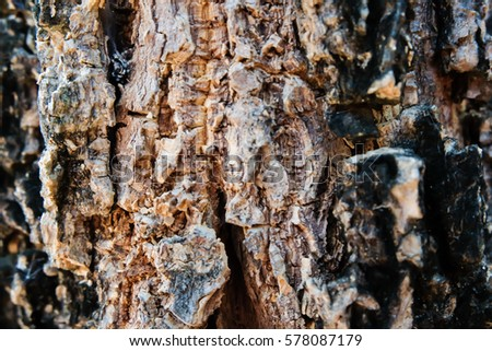close up tree texture / background