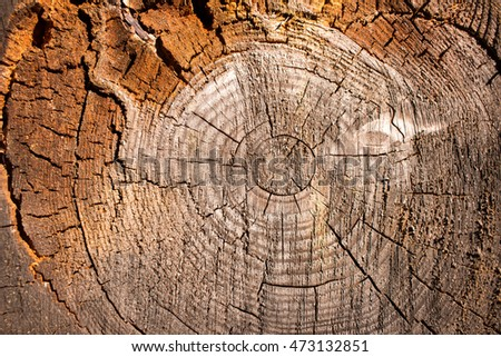 Close up tree texture showing rings