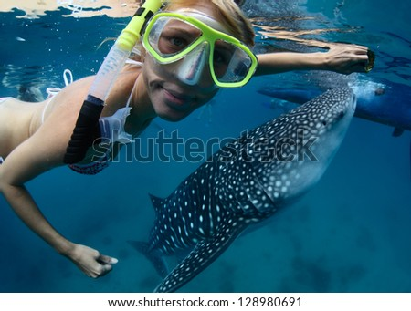 Close up underwater shoot of a young lady snorkeling with gigantic whale shark - stock photo