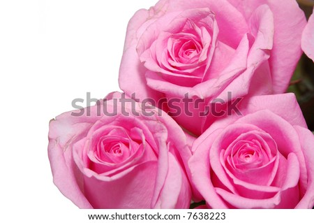 close up view a pink roses in bouquet - stock photo