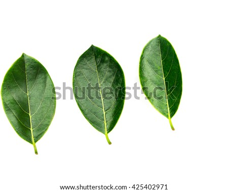 Close-up view collection of fresh green jack fruit leaves isolated on white background with copyspace - stock photo