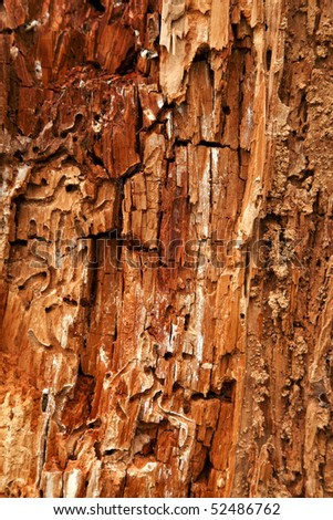 Close up view displaying the detailed textures of a decaying tree. - stock photo