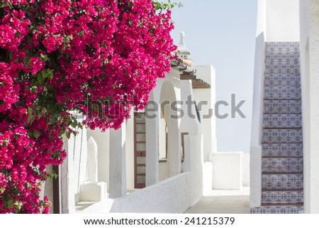 Close up view of a beautiful purple Bougainvillea flower on a portuguese house. - stock photo