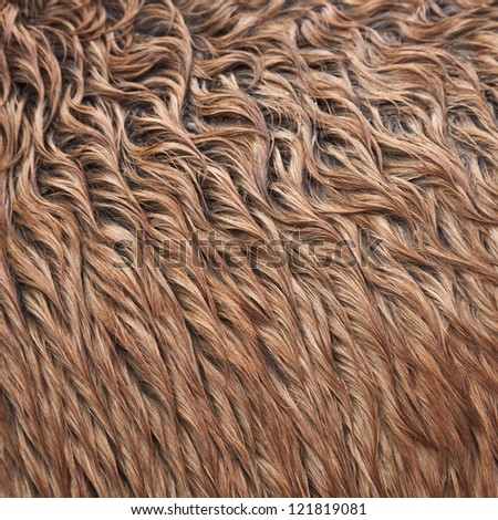Close up view of a brown wild horse fur - stock photo