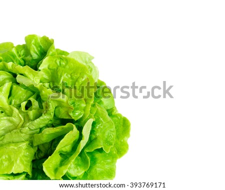Close-up view of a freshly picked organic home growth fresh green Iceberg lettuce isolated on white background. Food concept with copyspace. - stock photo