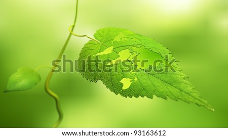 Close up view of a leaf with the world map cut out - ecology concept - stock photo