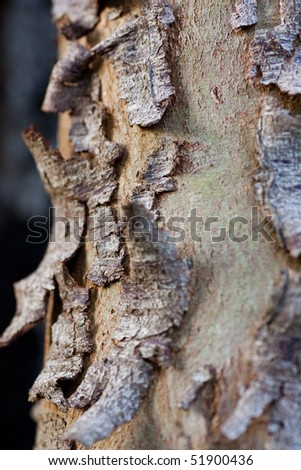 Close up view of a tree trunk with the skin peeled.