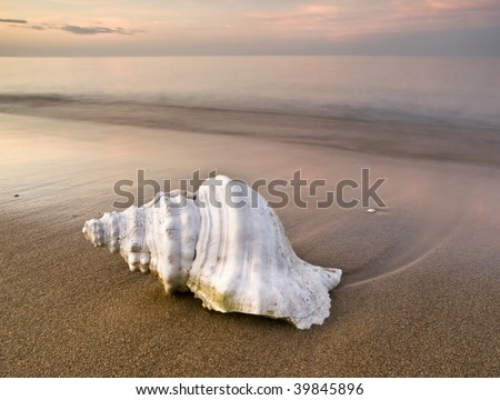 Close up view of a white shell on the sand of a lonely beach, with the warm light of sunset - stock photo