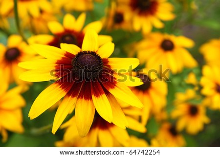 Close up view of a yellow cone flower - stock photo