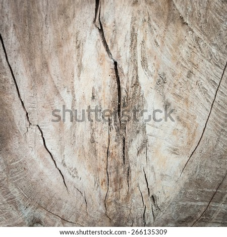 close up view of an driftwood stump - stock photo