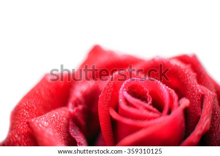 close-up view of beautiful red rose with water dew drops and heart bokeh, soft blur focus.  - stock photo